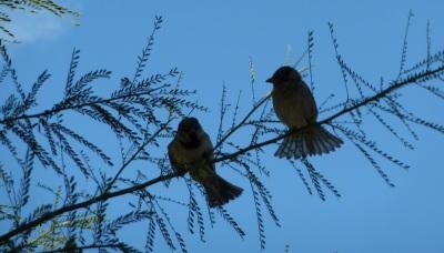 birds & branch