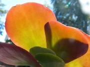 P1000852 cactus spectrum