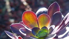 Part of my cactus series.