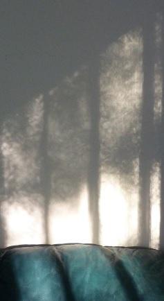 shadow trees