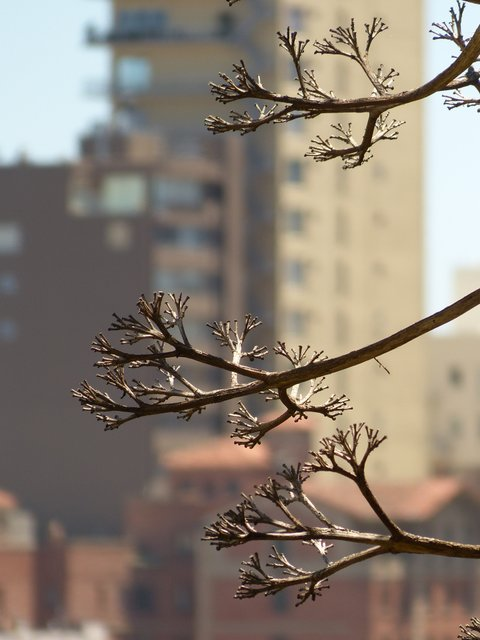 leafless branches, highrise