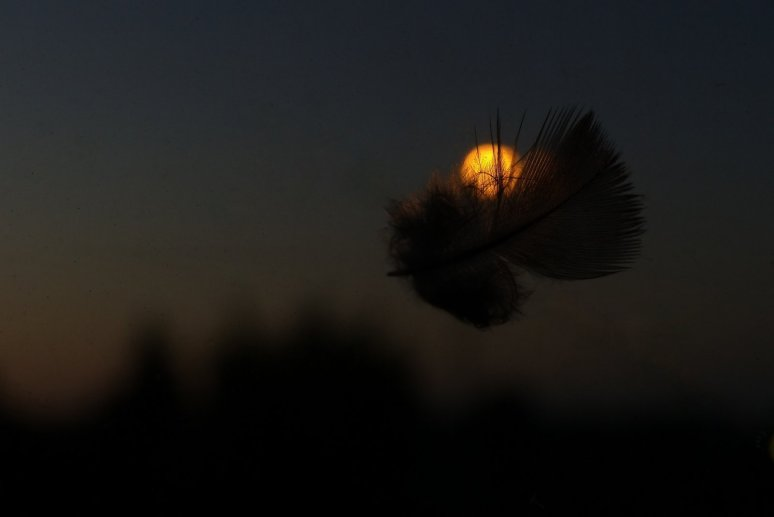 feathered moon