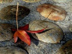 Serendipity—autumn's leaf fairy