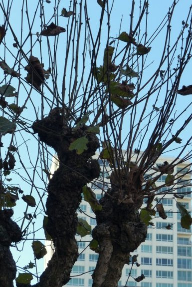 City tree: an architecture of its own