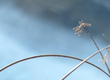tender reeds