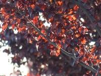 cinnabar vermilion orange